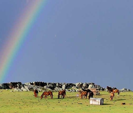 arc en ciel sur la steppe