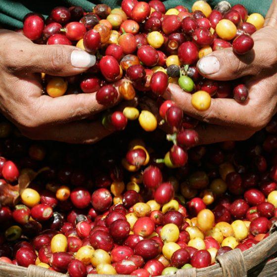 Coffee Region