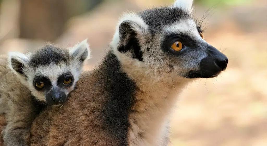 Un voyage moto à Madagascar