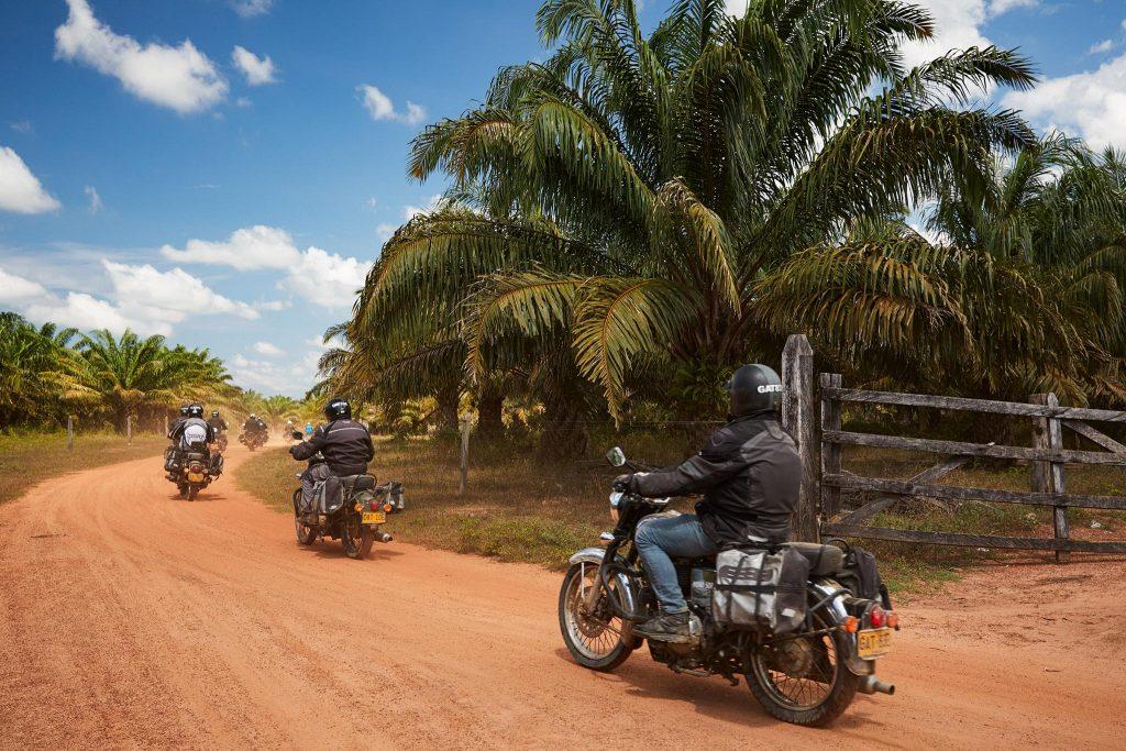 à travers les cultures de palmiers
