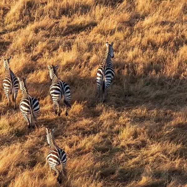 Survol du serengeti en avion